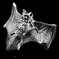 Darksilver Ring AR02